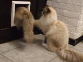 Двери для кошек